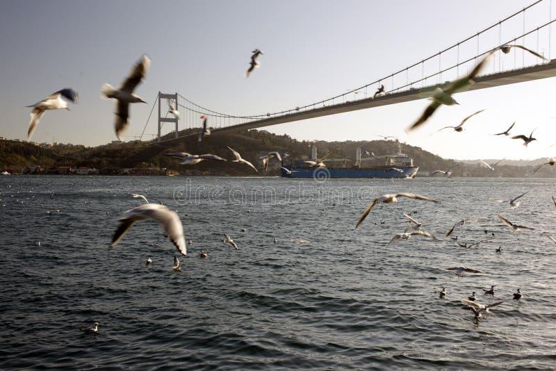 Eine erstaunliche Ansicht von Seemöwen und Meer und große Tanker, die durch das bosphorus von Istanbul überschreiten lizenzfreie stockfotografie