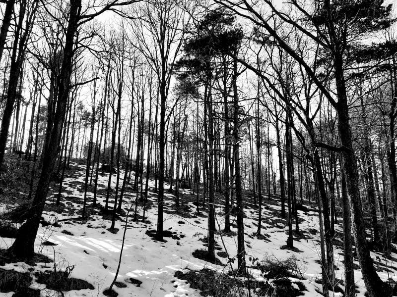 Eine erstaunliche Fotografie des Winters im Dorf lizenzfreie stockfotografie