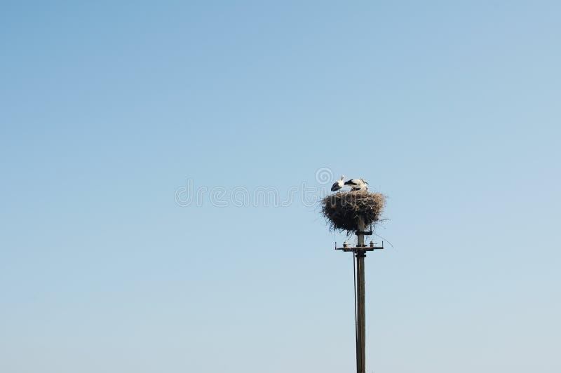 Eine Familie der Störche in einem großen Nest. lizenzfreie stockbilder
