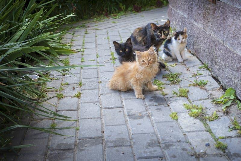 Eine Familie des kleinen Kätzchens in einer Stadt lizenzfreies stockbild