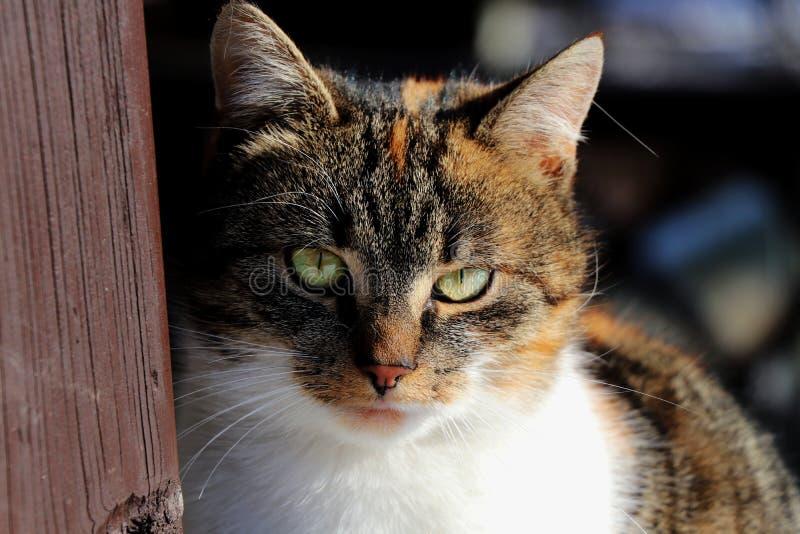 Eine farbige Katze, die Ansicht als Chef hat stockfoto