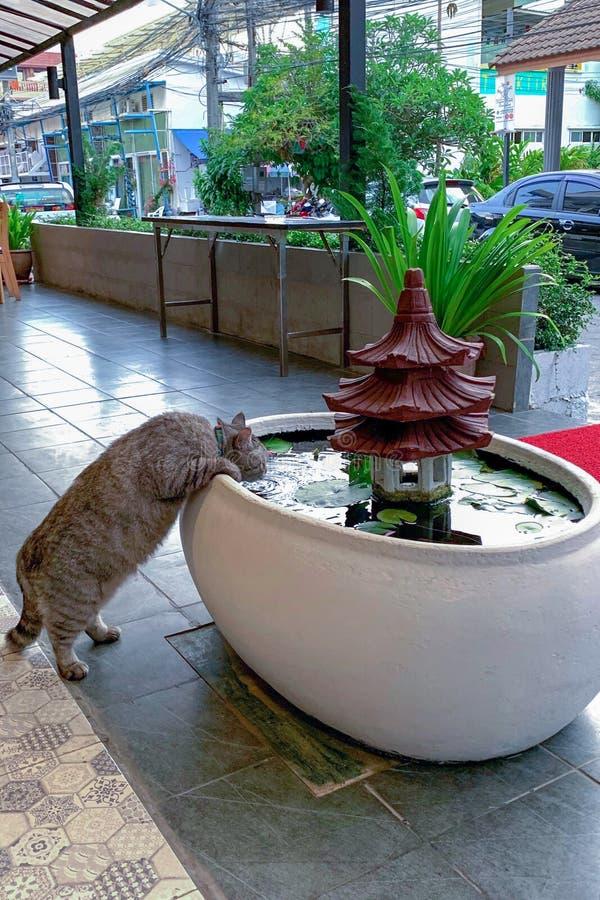 Eine fette Katze der getigerten Katze trinkt Wasser von einem Brunnen morgens Vertikales Foto lizenzfreie stockfotografie