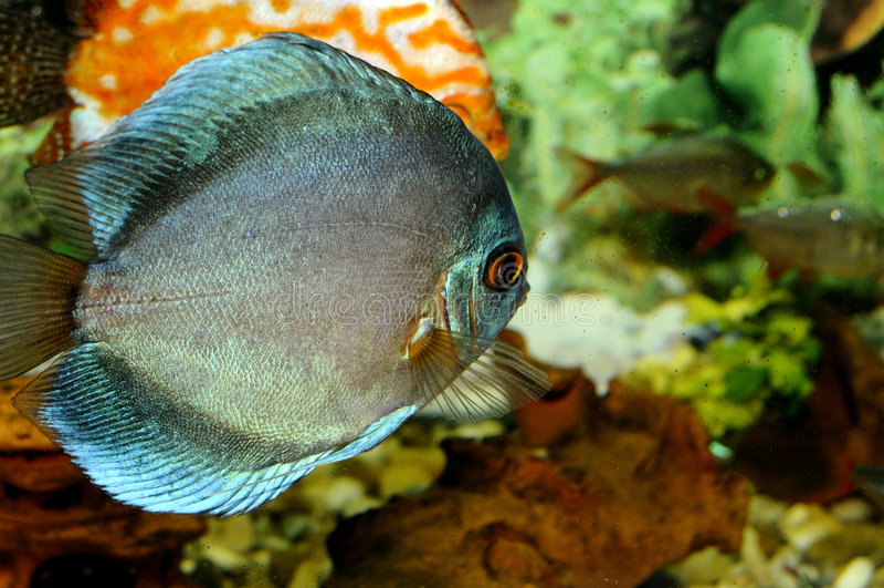 Download Eine Fischreise stockfoto. Bild von fischen, tief, orange - 9088082