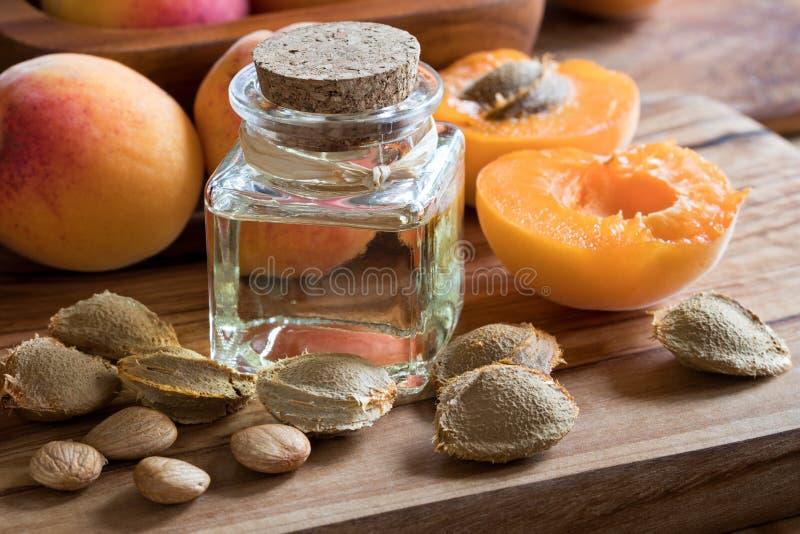 Eine Flasche Aprikosenkernöl mit Aprikosenkernen und Aprikosen stockfoto