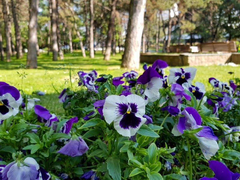 Eine Fotografie von sch?nen Blumen im Stadtpark stockbild