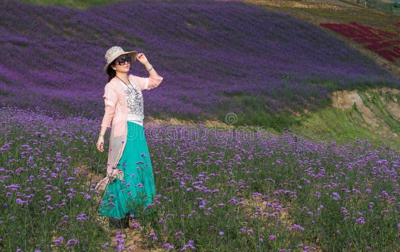 Eine Frau auf dem erstaunlichen großen Lavendel-Gebiet stockfoto