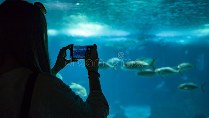 Eine Frau, die Foto von den Fischen unter Wasser macht stockbilder