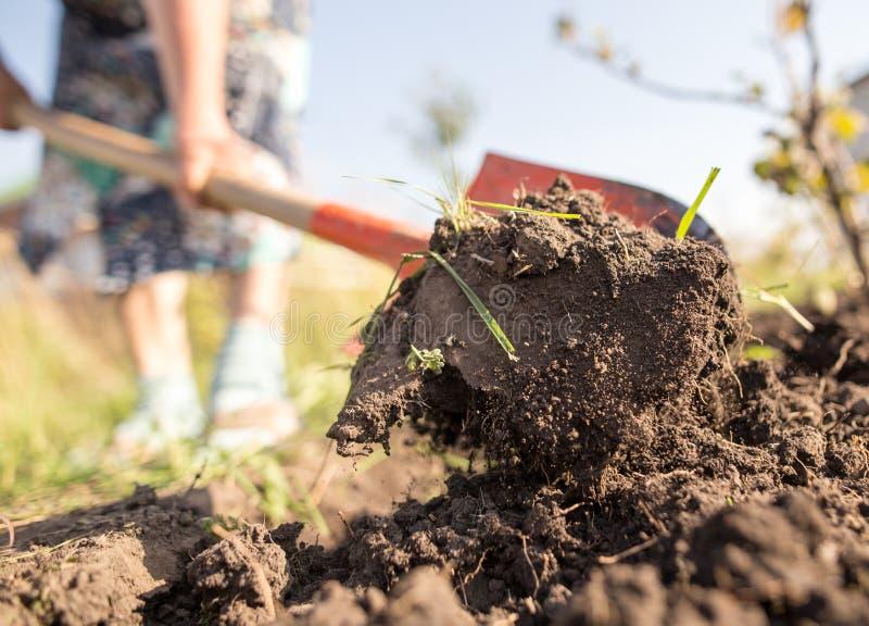 Eine Frau gräbt einen Garten mit einer Schaufel stockfotografie