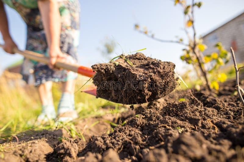 Eine Frau gräbt einen Garten mit einer Schaufel lizenzfreie stockfotografie