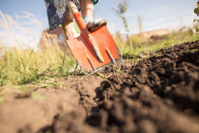Eine Frau gräbt einen Garten mit einer Schaufel lizenzfreies stockbild
