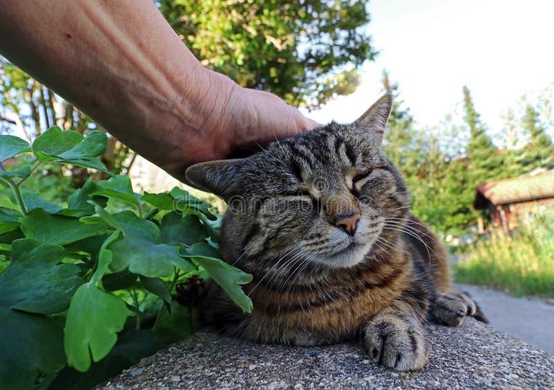 Eine Frau streicht ihre Katze über dem Kopf stockbild
