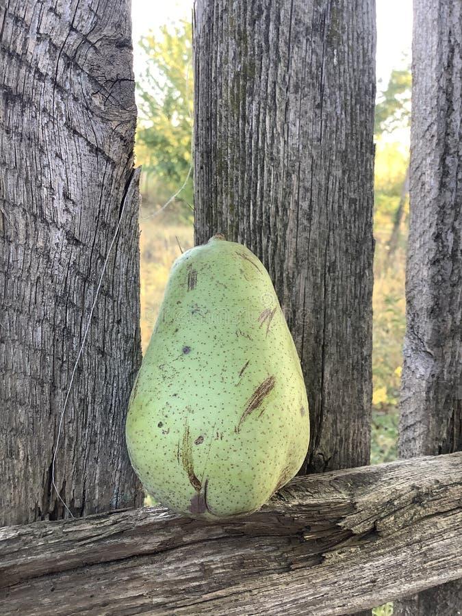 Eine Frucht, die auf den Holzzaun fällt stockfotos
