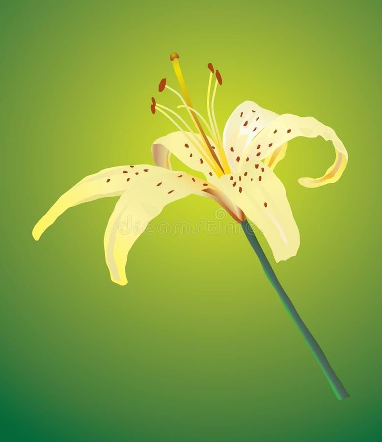 Eine gelbe Lilie stock abbildung