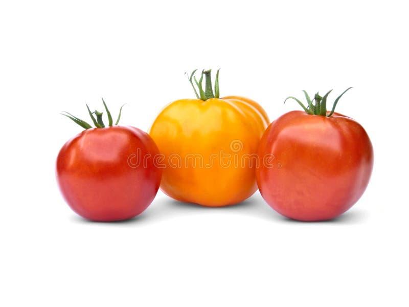Eine gelben und zwei roten Tomaten lizenzfreies stockfoto