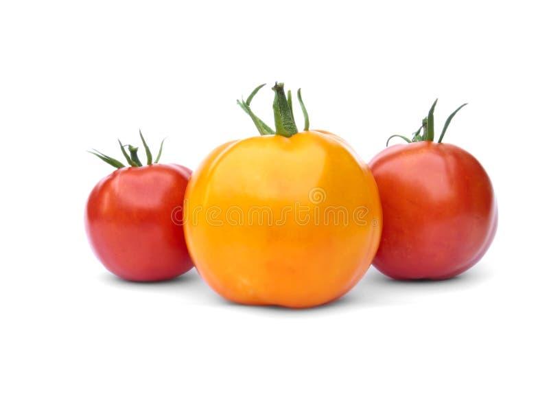 Eine gelben und zwei roten Tomaten stockbild