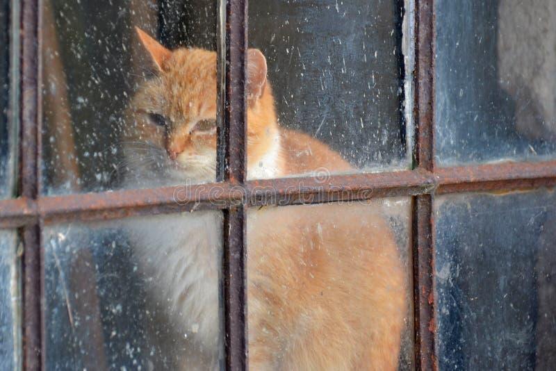 Eine gingery Katze hinter einem alten Fenster lizenzfreies stockbild