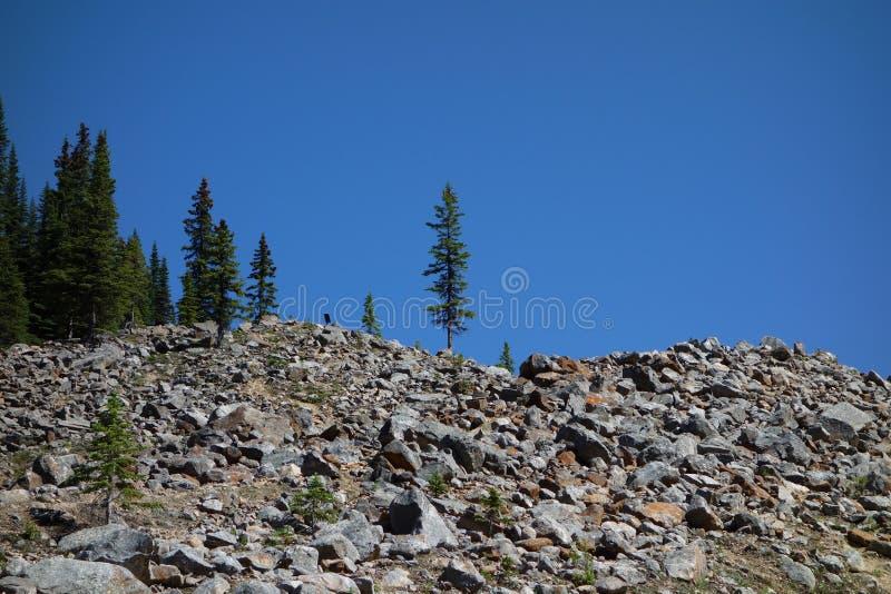 Eine Glazial- Szene in den schönen felsigen Bergen lizenzfreie stockfotografie