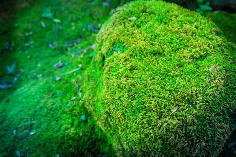 Eine grüne MOS-Abdeckung der Felsen im Wald, abstrakter Hintergrund stockfoto