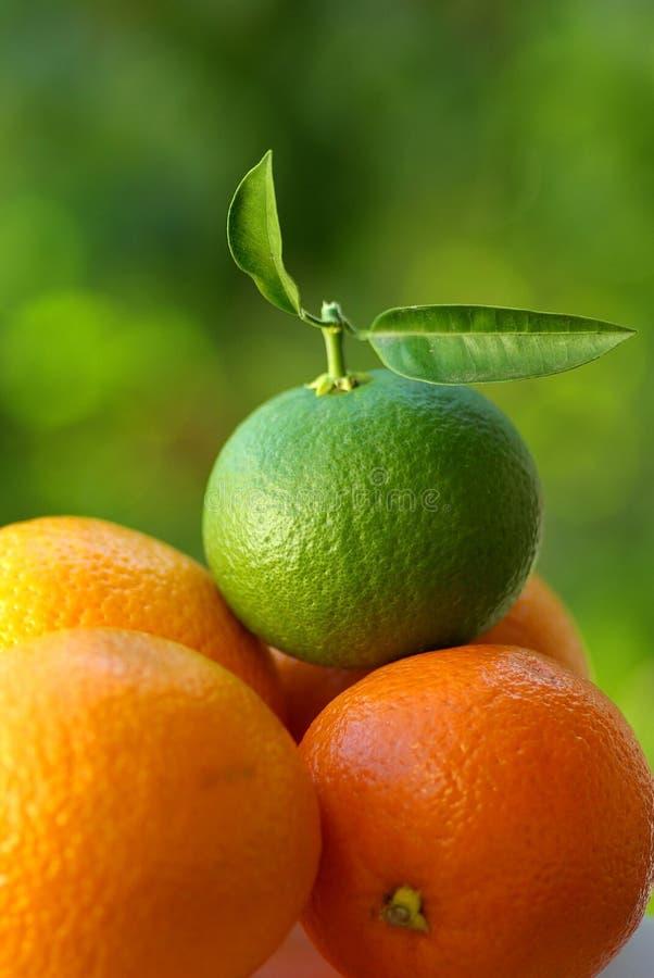 Eine grüne Orange stockfotos