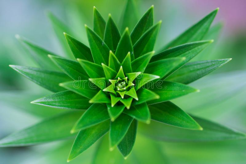 eine Grünpflanzenahaufnahme stockfotografie
