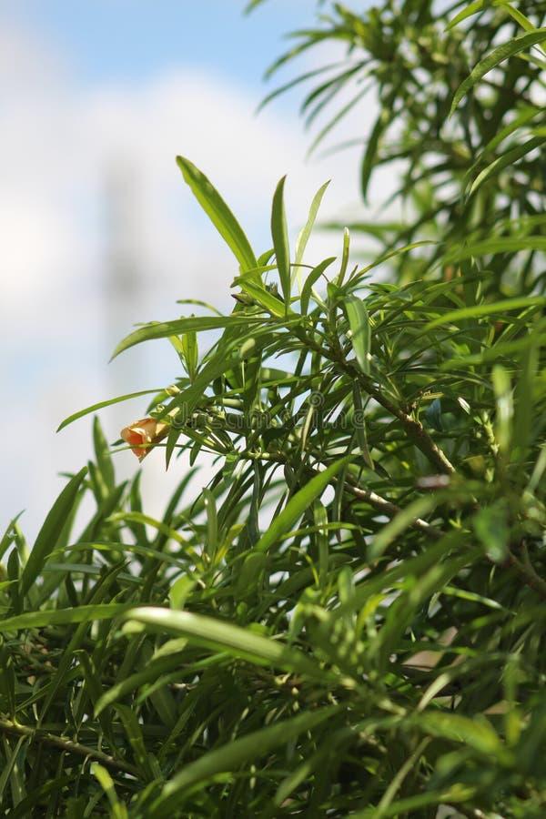 Eine Gr?npflanze w?hrend einer Sommersaison stockfotos