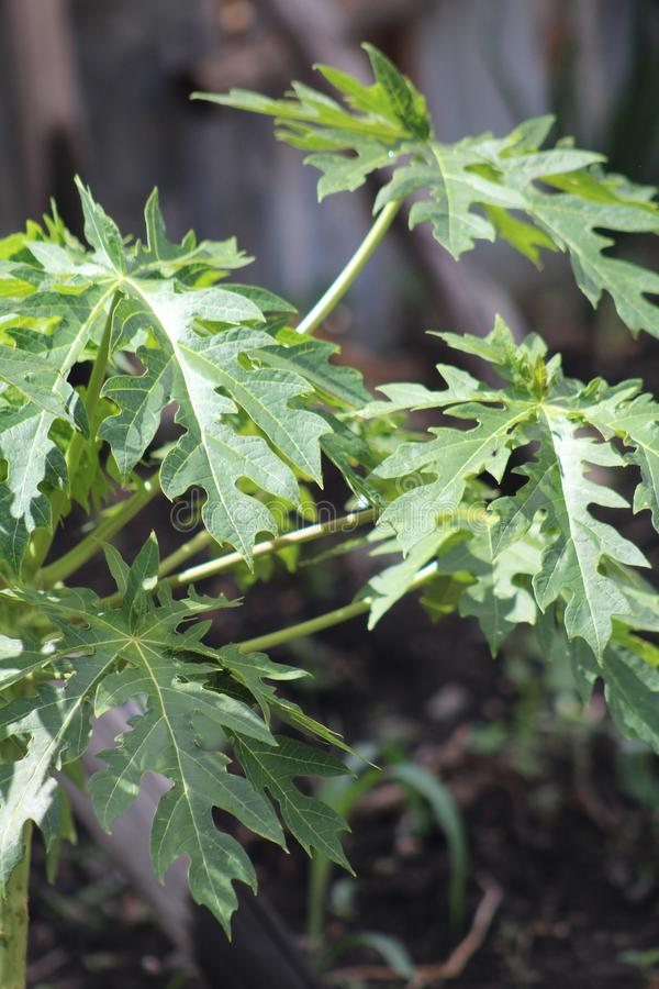 Eine Gr?npflanze w?hrend einer Sommersaison lizenzfreie stockfotografie