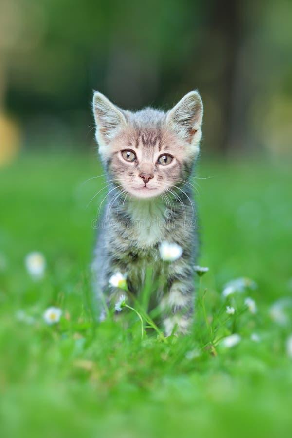 Eine graue Katze draußen lizenzfreie stockfotografie