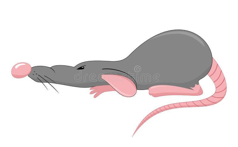 Eine graue verärgerte Ratte lizenzfreie abbildung