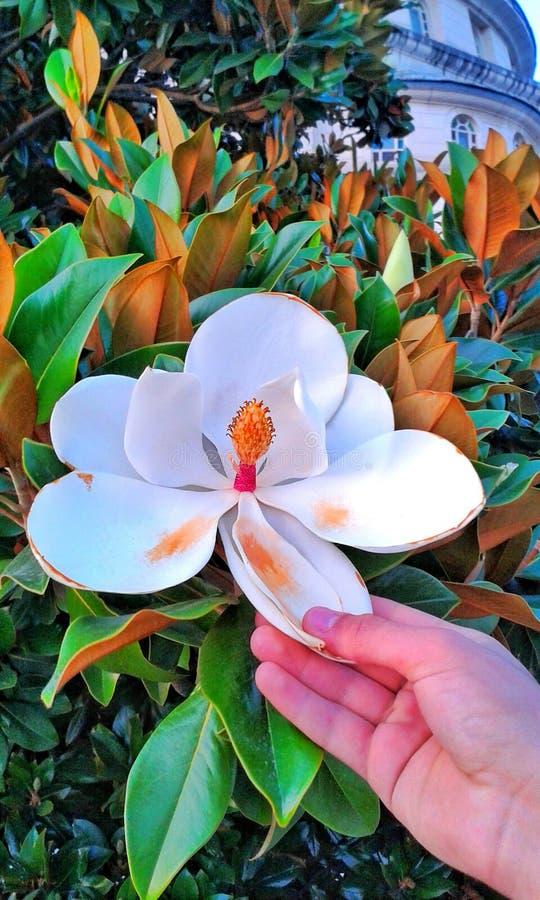Eine große Blume stockbilder