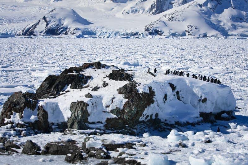 Eine große Gruppe Pinguine lizenzfreie stockfotografie