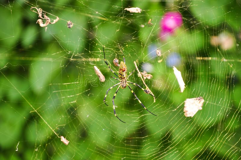 Eine große Spinne stockbilder