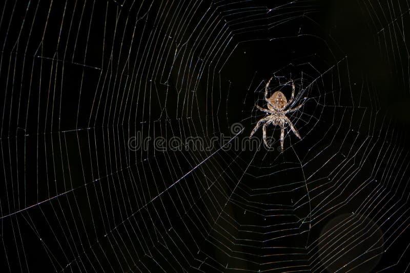 Eine große Spinne sitzt auf seinem Spinnennetz lizenzfreies stockbild