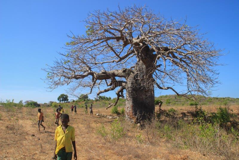 Eine Gruppe afrikanische Kinder, die nahe einem großen Baobab spielen lizenzfreies stockbild