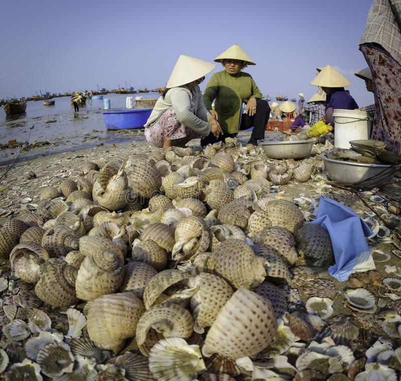 Fisher-Frauen in Vietnam stockbilder