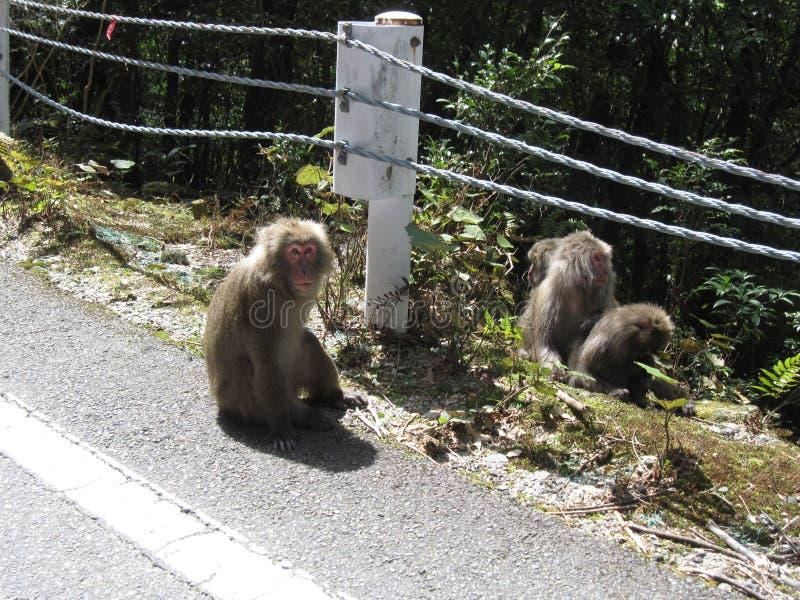 Eine Gruppe japanische Makaken lizenzfreies stockbild