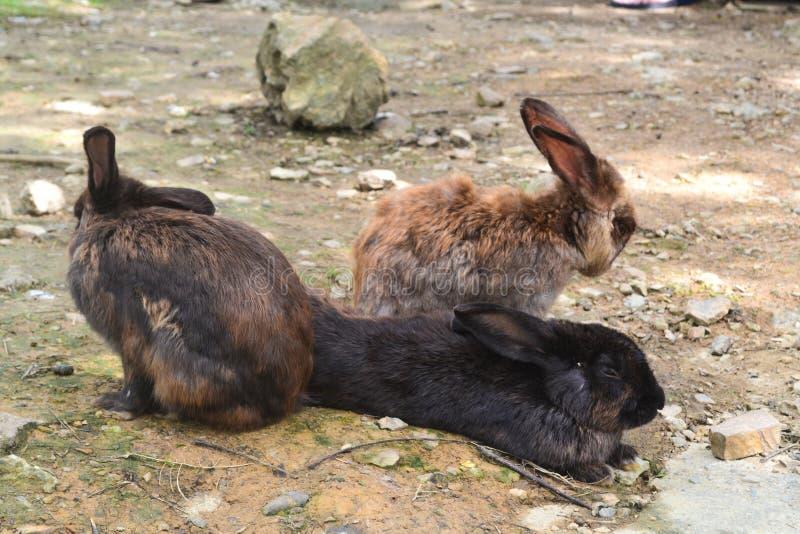 Eine Gruppe Kaninchen im Garten lizenzfreies stockfoto