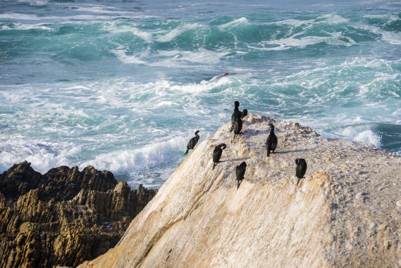 Eine Gruppe Kormorane, die auf einem Felsen auf der Küstenlinie des Pazifischen Ozeans stillstehen; brechende Wellen im Hintergru stockfotos