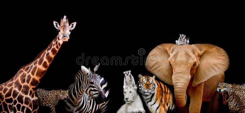 Eine Gruppe Tiere sind zusammen auf einem schwarzen Hintergrund mit Text stockfotografie