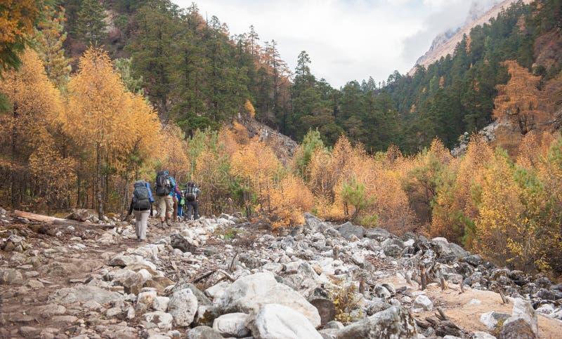 Eine Gruppe Trekkers, die zu Samagau-Tal auf Manaslu-Stromkreis mit Ansicht des Bergs Manaslu vorangehen, erstrecken sich 8 156 M lizenzfreies stockbild