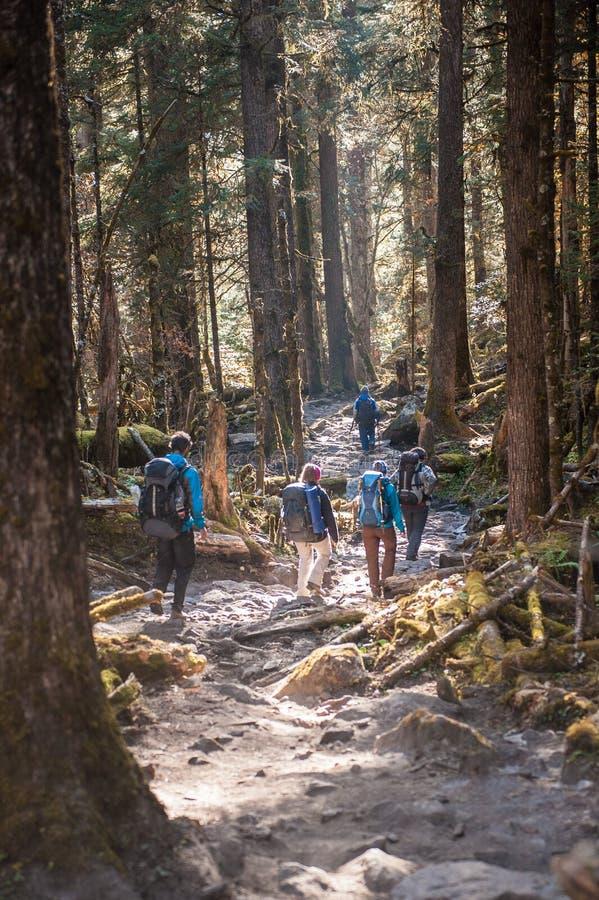 Eine Gruppe Trekkers im Wald, nachdem sie den Durchlauf auf Manaslu-Stromkreis mit Ansicht des Bergs Manaslu gegangen hat, erstre lizenzfreies stockfoto
