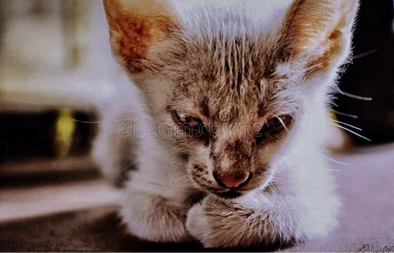 Eine hübsche Katze stockbilder
