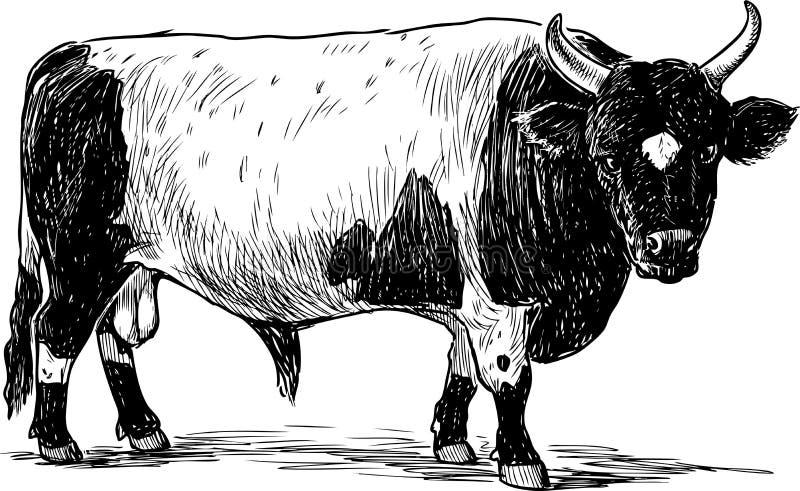 Eine Handzeichnung eines großen beschmutzten Stiers stock abbildung
