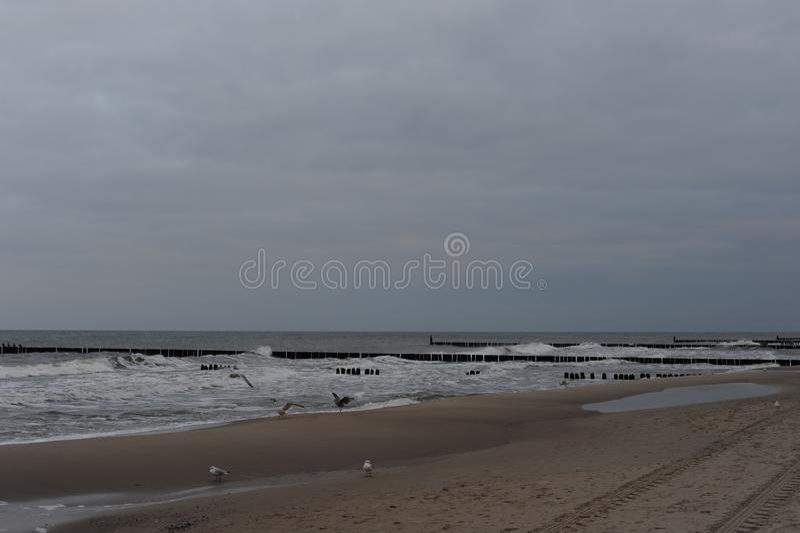 Eine Herde von Seemöwen auf dem Sandstrand von Ostsee im Norden von Polen im Winter lizenzfreies stockbild
