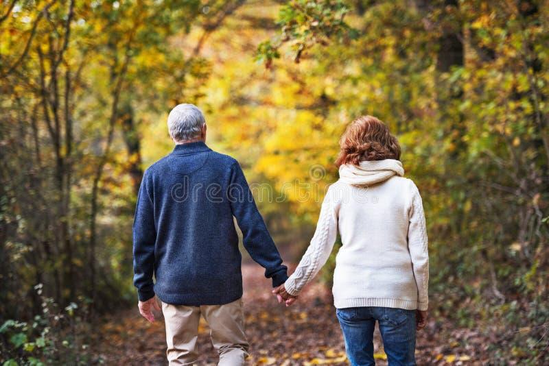 Eine hintere Ansicht eines älteren Paares, das in eine Herbstnatur geht stockfotografie