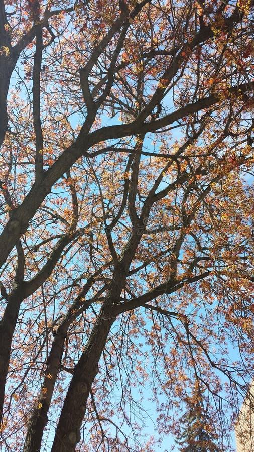 Eine Hoffnung des Frühlinges lizenzfreie stockbilder