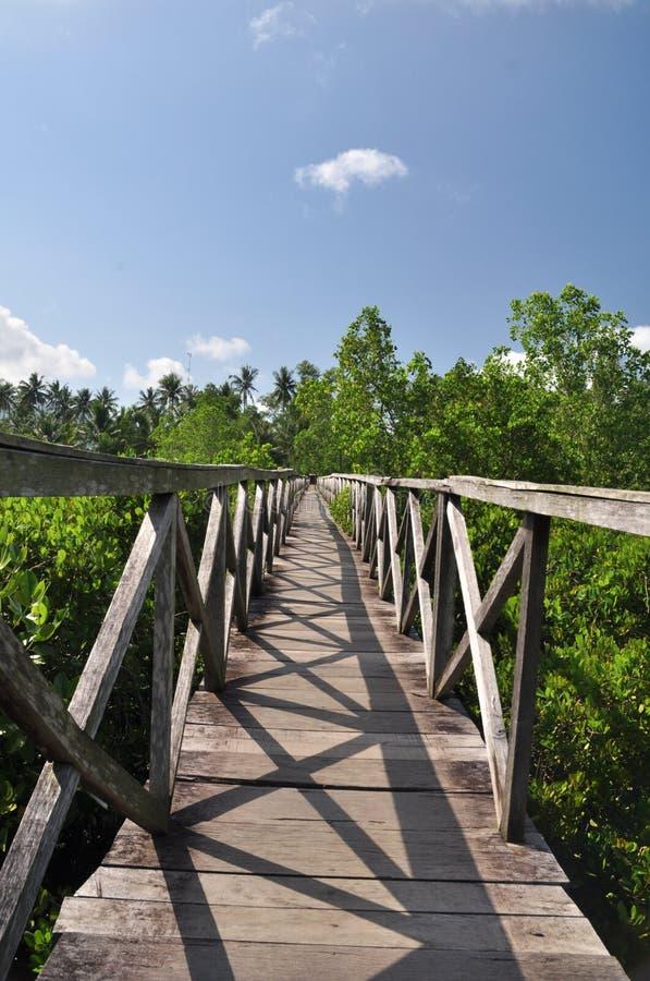 Eine Holzbrücke spaltet Mangrovenwald gegen einen Hintergrund von Kokosnussbäumen auf lizenzfreies stockfoto
