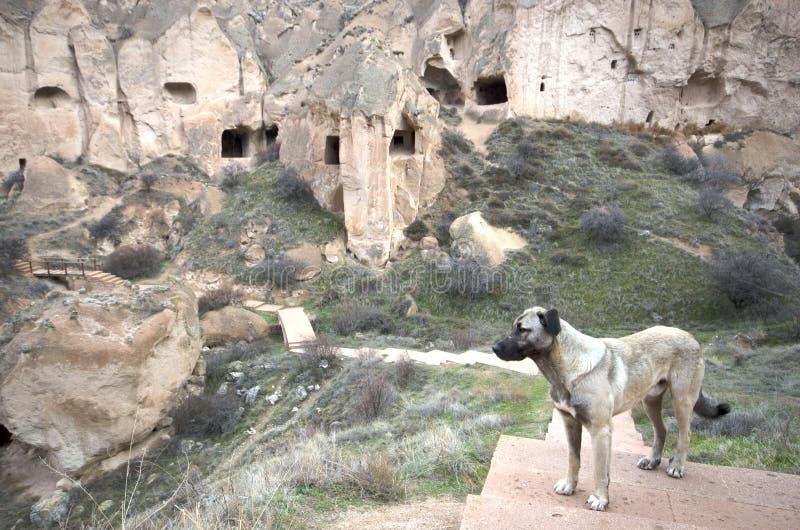 Eine Hundestellung vor feenhaften Kaminen, Cappadocia/die Türkei stockfotografie