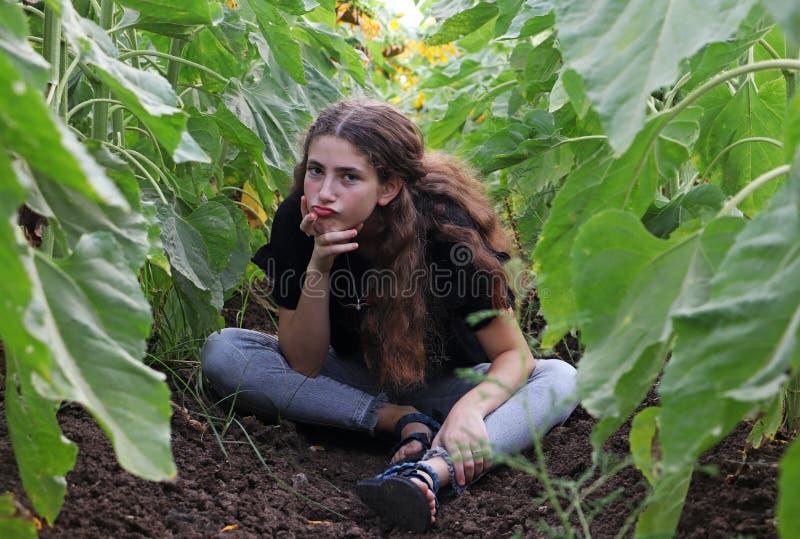 Eine Jugendliche und Sonnenblumen lizenzfreie stockfotografie