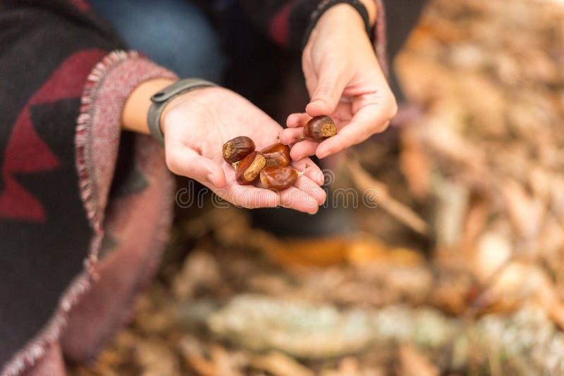 Eine junge Frau hebt die Kastanien auf, die aus den Grund in einem herbstlichen Wald gefallen werden lizenzfreie stockfotografie