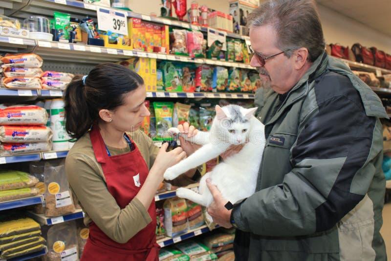 Eine junge Frau schneidet die Nägel einer weißen Katze. lizenzfreie stockbilder